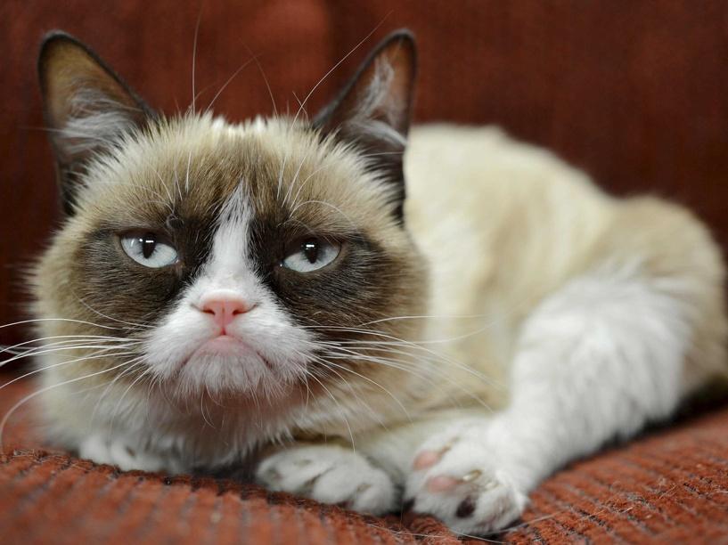 Достаток больше, чем у звезд Голливуда: «сердитая кошка» заработала 100 млн долларов
