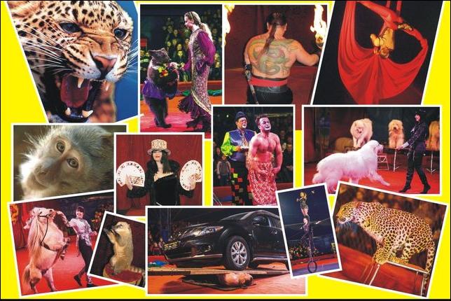 Тамбовчане могут бесплатно сходить на шоу персидских леопардов