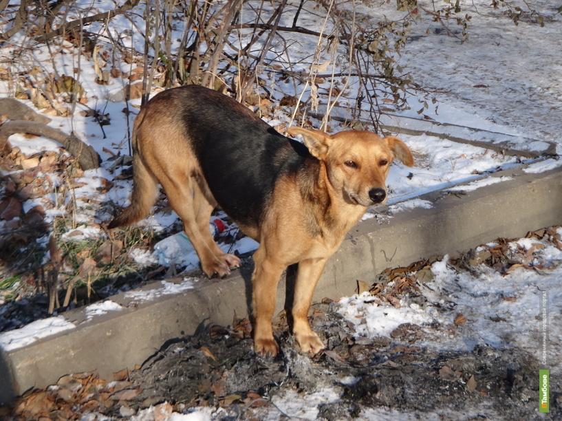 В Тамбове бродячая собака покусала взрослого мужчину