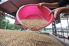 В Тамбовской области появится комплекс по переработке зерновых