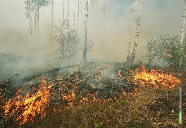 Тамбовских лесников привлекут к ответственности за пожар