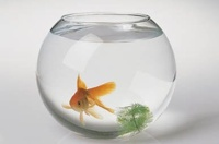 Аквариум с рыбками запустят в космос