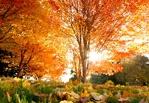 Выходные в Тамбове: встречаем настоящую осень