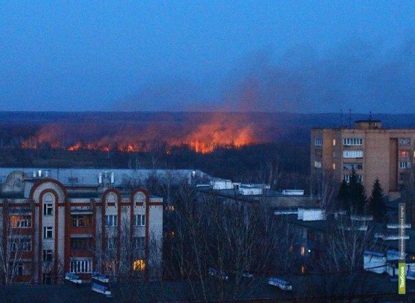 В Тамбове выгорела часть парка Дружбы