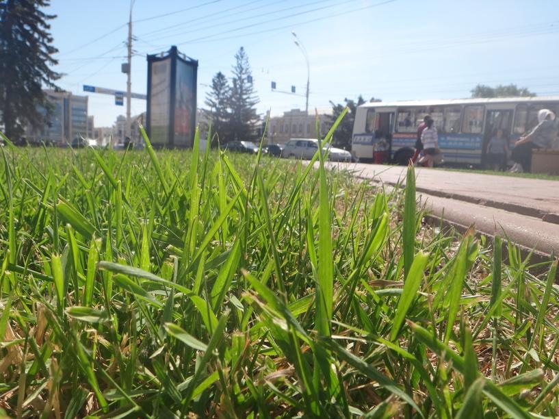 Тамбовчане сами решат, как должны выглядеть дворы и зелёные зоны в городе
