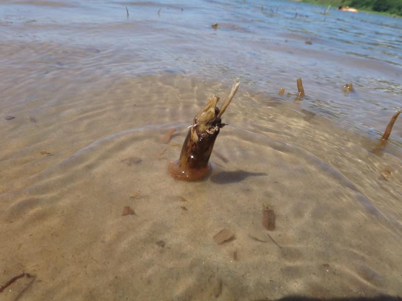 В Тамбовском районе утонул 55-летний мужчина