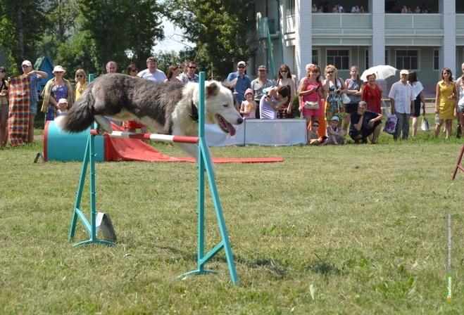 На День здоровья и спорта в Тамбове покажут танцы с собаками