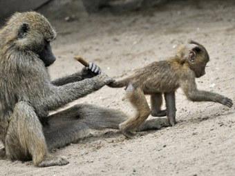 Ученые создали первую рекламную кампанию для обезьян