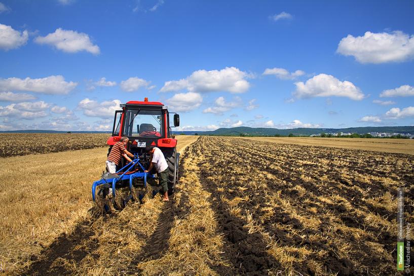 Тамбовские фермеры получат субсидии на 556 миллионов рублей