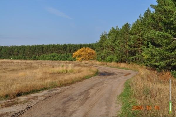 Тамбовские чиновники предлагают переписать Лесной кодекс