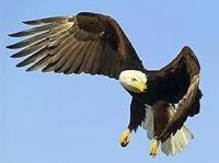 В Австралии птица украла камеру и сняла свой полет на видео