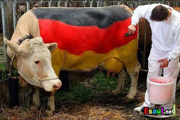 В Тамбов завезут из Татарстана немецких коров