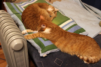 Социальная сеть для любителей котиков появилась в интернете