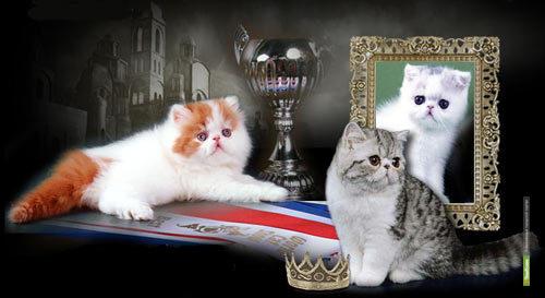 Тамбовские фелинологи День города отметят выставкой кошек