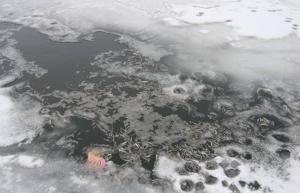 Из-за экоаварии под Тамбовом погибло более двух тысяч рыб