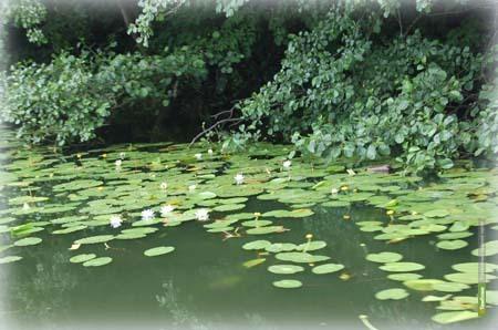 Экологи расчистят тамбовскую Грязнуху