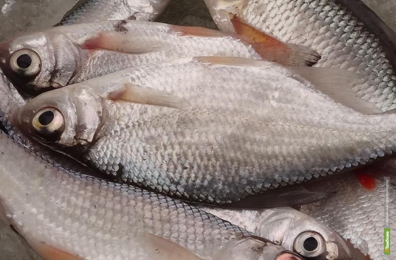 Рыбинспекторы изъяли у браконьеров более ста килограммов добычи