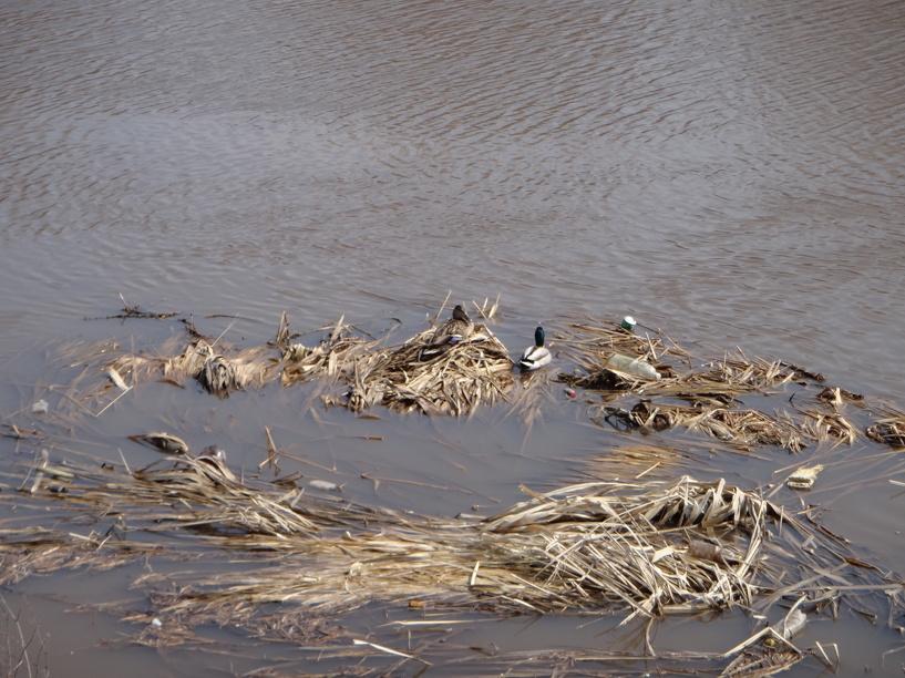 В Тамбовской области в расчистке нуждаются свыше 600 километров рек