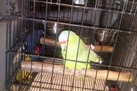 В Мексике попугай выдал полиции пьяного водителя