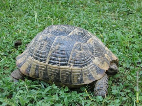 Тамбовский зоопарк приютил нового постояльца