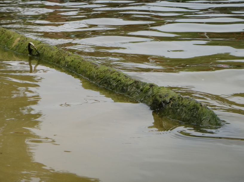 Житель Знаменского района утонул в реке