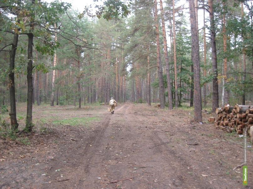 В лесах Тамбовщины снизилась пожарная опасность