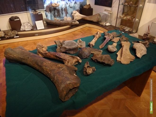 В Тамбовском краеведческом музее можно увидеть кости мамонта