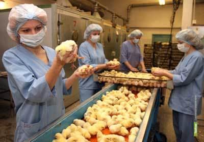 На реконструкцию тамбовской птицефабрики потратят 8,5 миллиардов рублей