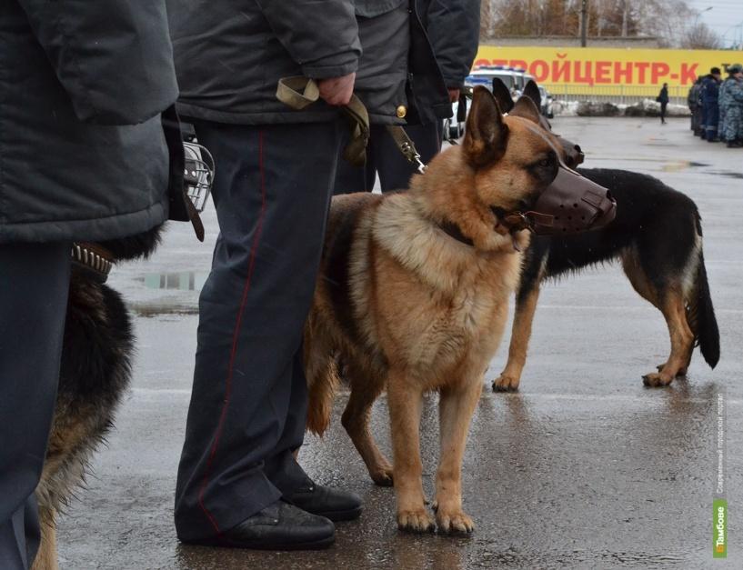 В доме жителя посёлка Дмитриевка полицейские нашли полкило марихуаны