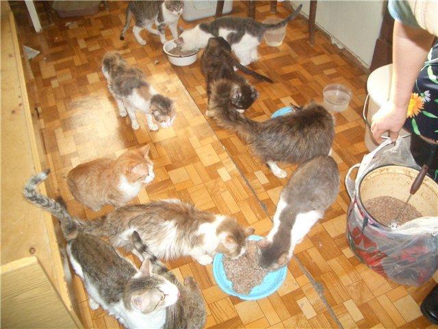 Правила содержания домашних животных в Тамбове