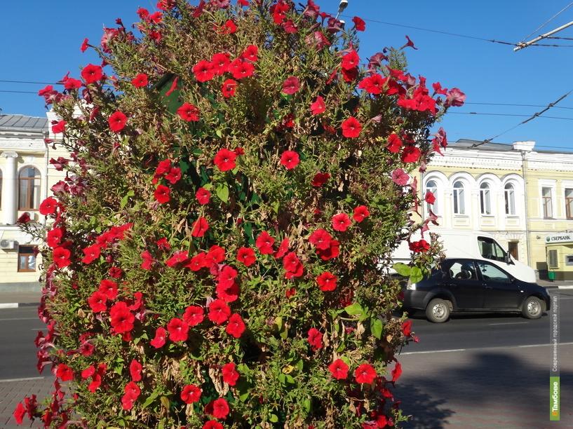 В Тамбове исчезают цветочные композиции