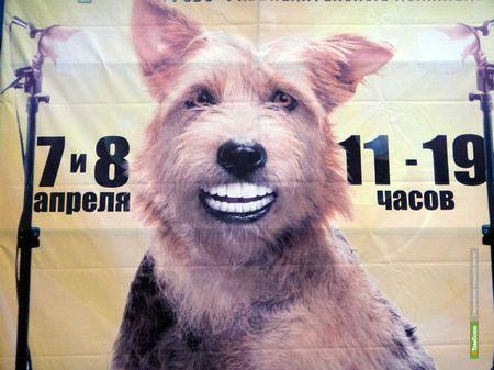 Тамбовчане увидят собачье дефиле