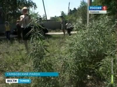 Тамбовские наркополицейские уничтожили 37 тонн мака и конопли