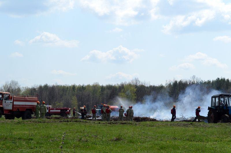 Тамбовские лесоводы занялись профилактикой пожаров