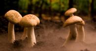 В Тамбовской области грибами отравились восемь человек