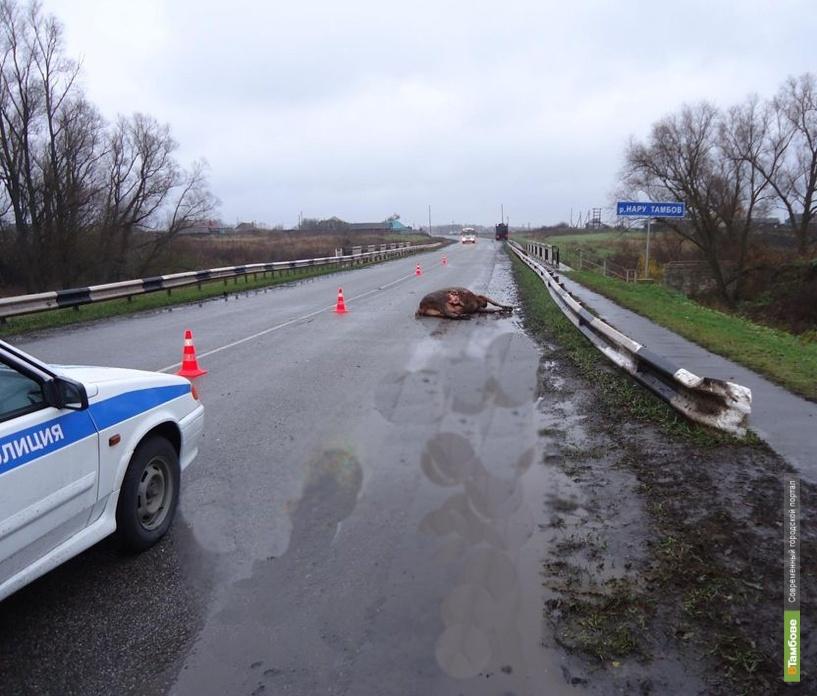 В Рассказовском районе грузовик сбил корову и её хозяйку