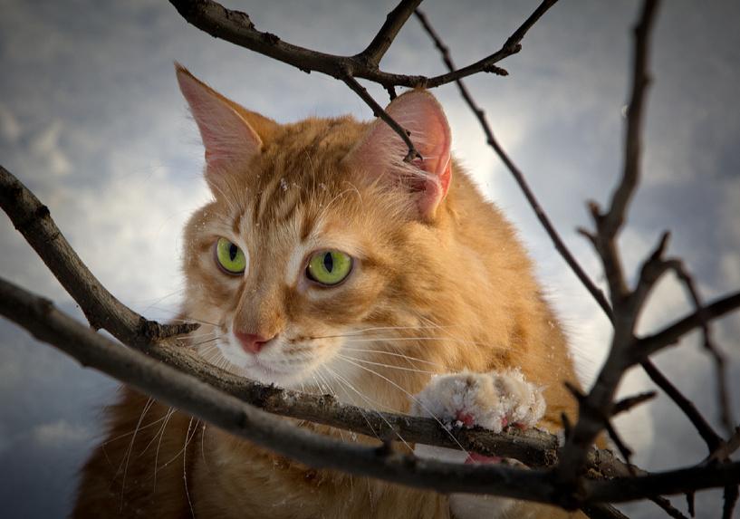 Рассказовские пожарные спасли кота, который пять дней просидел на дереве