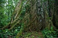 Google приглашает на прогулку по джунглям