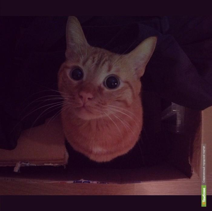 ВТамбове объявляет конкурс красоты … для котов