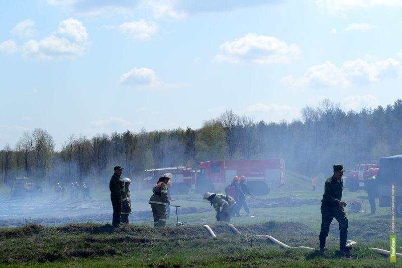 Огонь уничтожил часть леса в Тамбовском районе