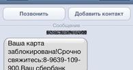 За сутки аферисты обманули тамбовчан почти на полмиллиона рублей