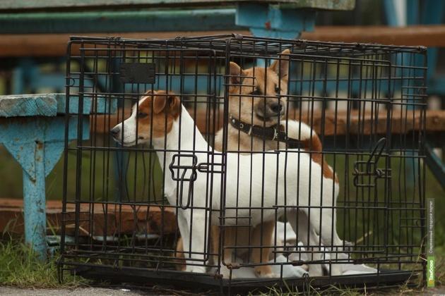 Приют для бездомных животных может появиться под Тамбовом уже этим летом