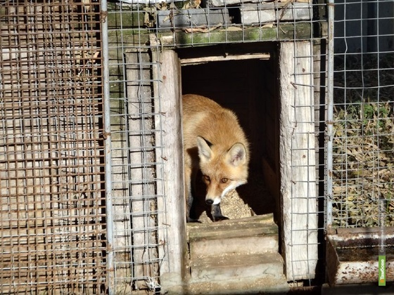 Обитателям тамбовского зоопарка увеличили рацион питания