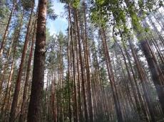 Незаконная вырубка деревьев обошлась моршанцу в 2 миллиона рублей