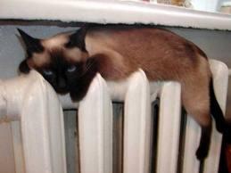 В квартиры тамбовчан наконец перестали подавать тепло