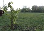 Тамбовчане составили предварительный список растений-символов региона
