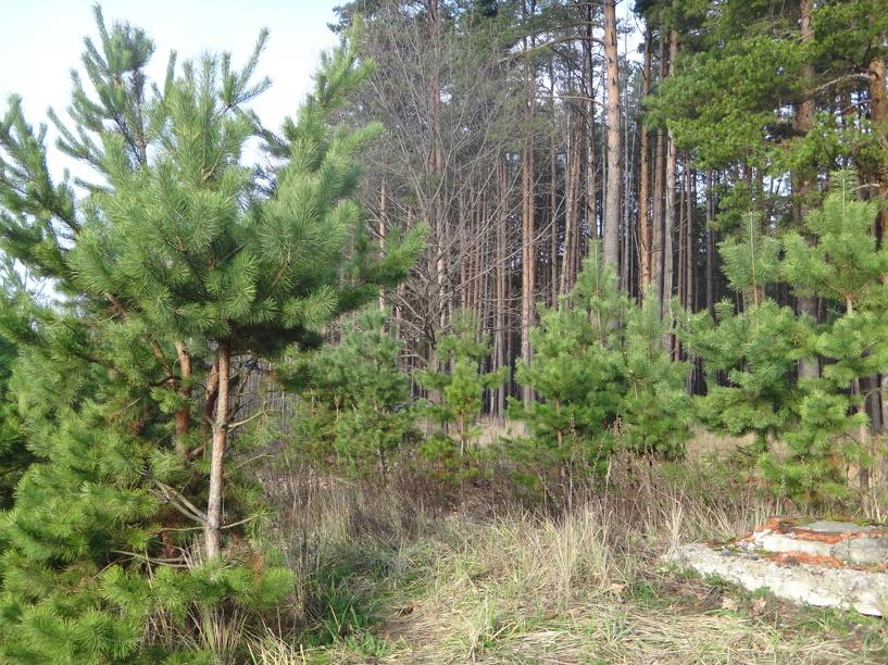 В регионе ввели ограничение на пребывание в лесах