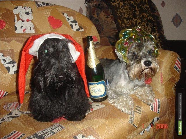 Голосуем за самую смешную новогоднюю фотографию!