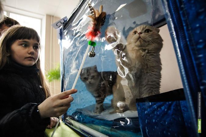 В Пушкинской библиотеке прошла выставка кошек