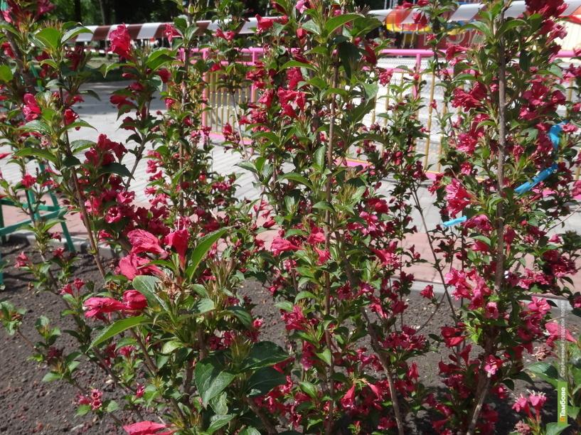 В тамбовском горсаду появится цветущий сад